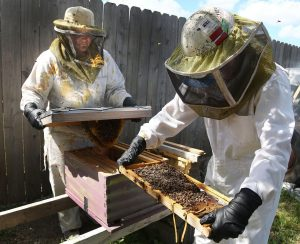 Bees Inspection Melbourne