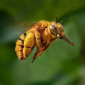 Bee Removal Melbourne Prices