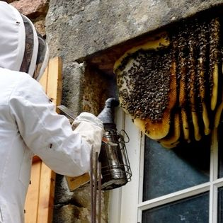 Bees Pest Control Melbourne
