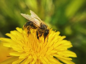 Bee Control Melbourne Prices