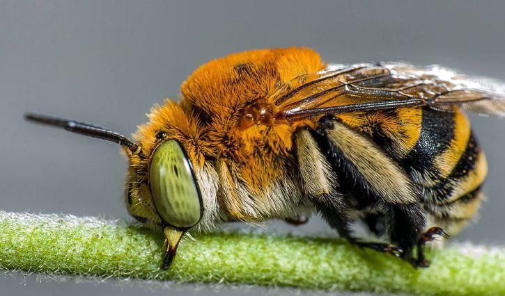 Bee Pest Control Melbourne