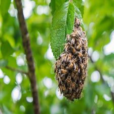 Bee hive remvoal