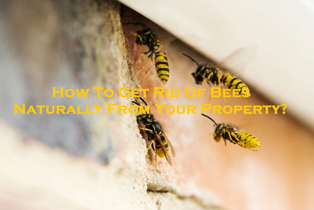 How To Get Rid Of Bees Naturally From Your Property?